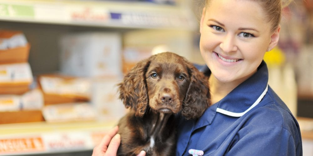 Vacancies at Abbeycroft veterinary surgery
