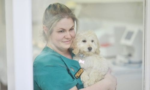 Nurse Katie at Abbeycroft Vets in Northwich