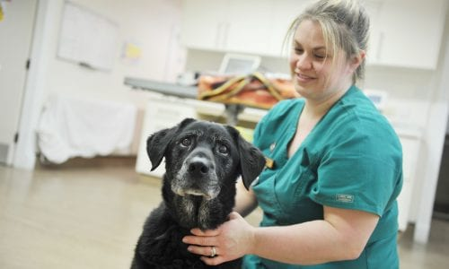 Weight clinics at Abbeycroft Veterinary Surgery in Northwich