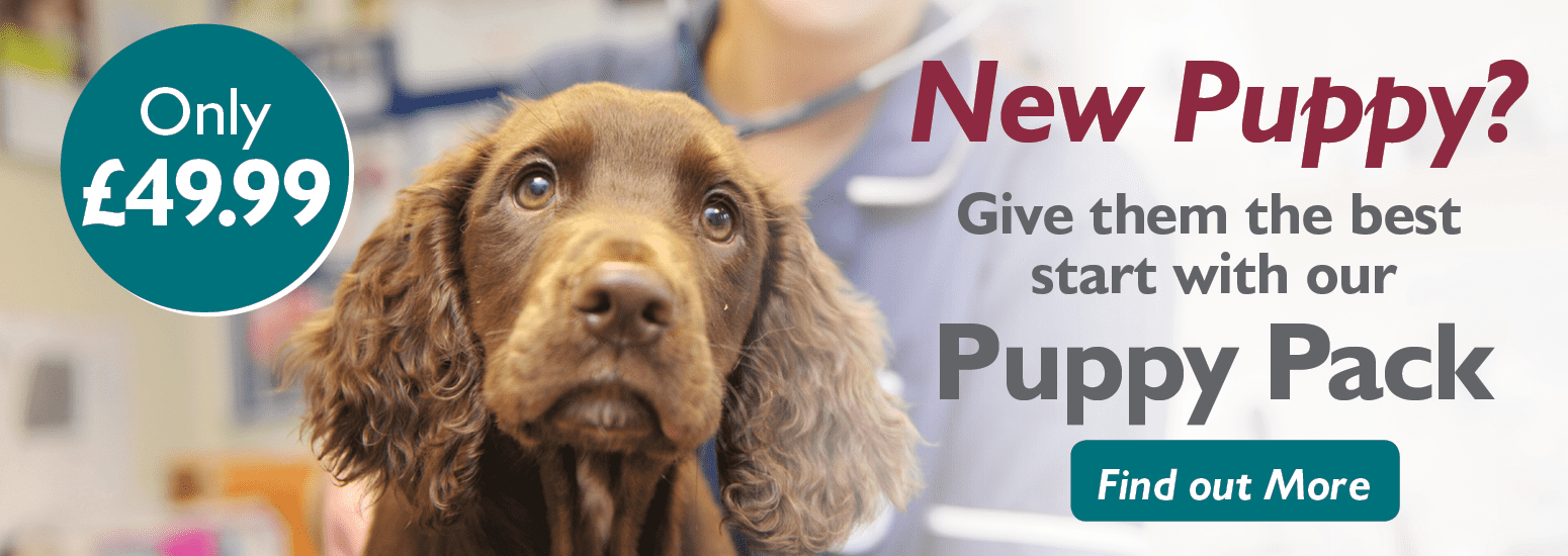 Willows Veterinary Group Puppy Pack