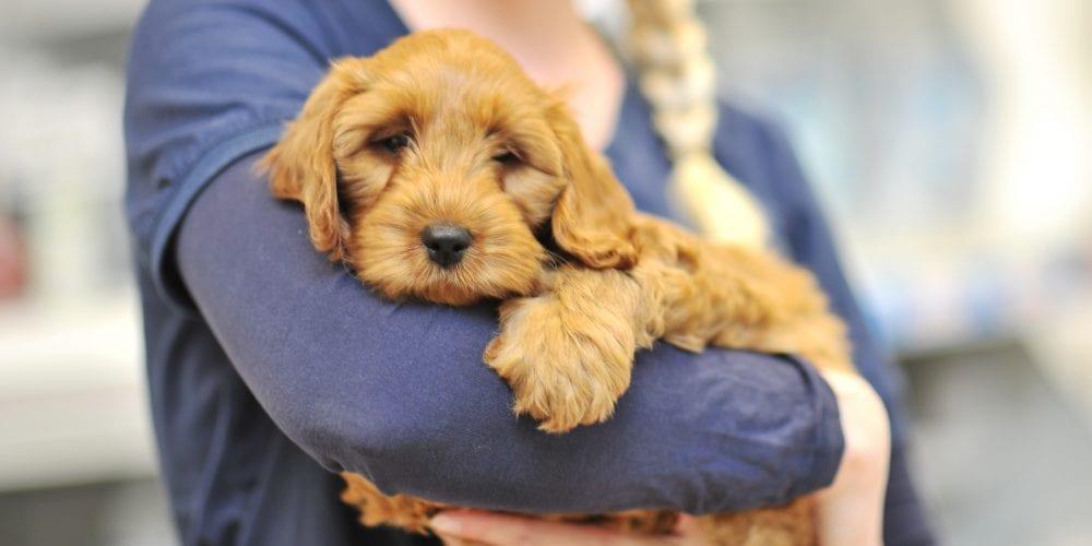 Puppy pack nurse cuddling dog