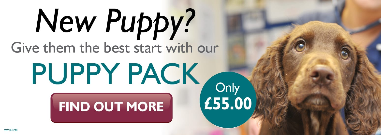 Puppy Pack covering puppy injections, flea & worm treatment and much more at Abbeycroft Vets in Northwich
