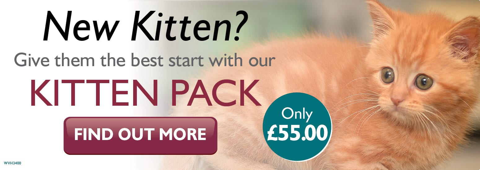 Kitten Pack covering kitten injections, flea & worm treatment, and much more for only £55 at vets in Northwich